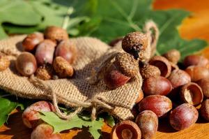 acorns-1710577_1280